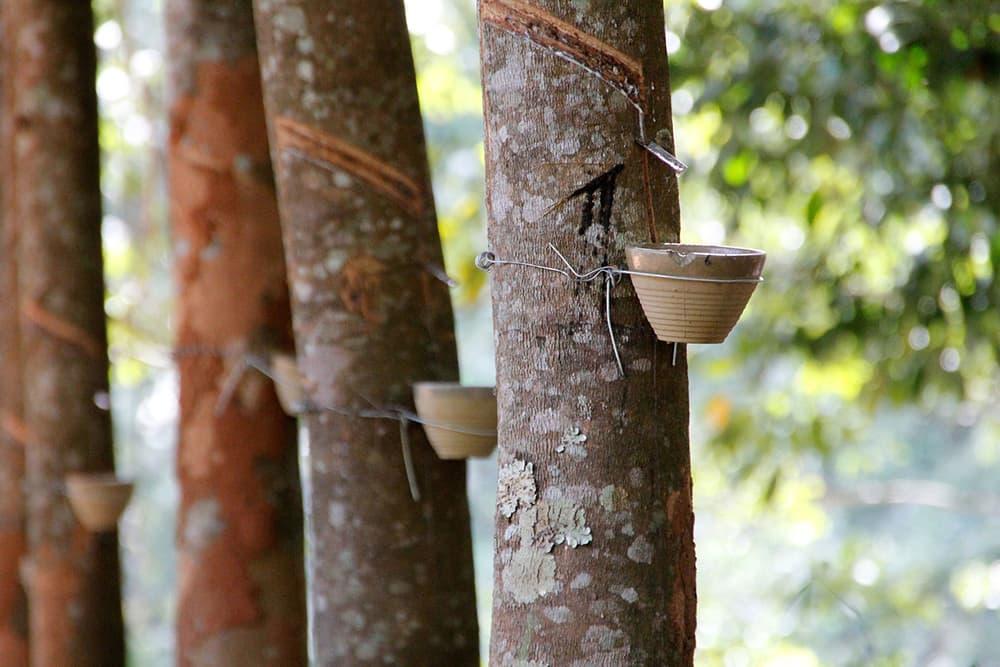 tailandia gomma naturale industriagomma