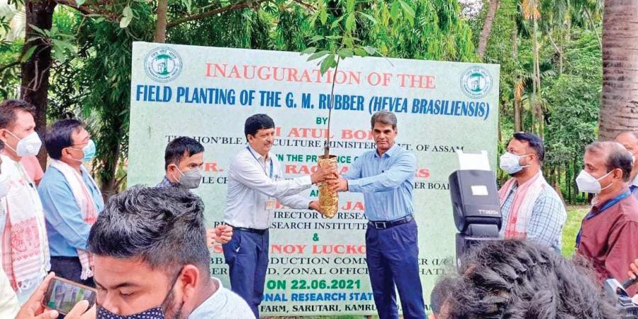 Kerala gomma ogm industriagomma